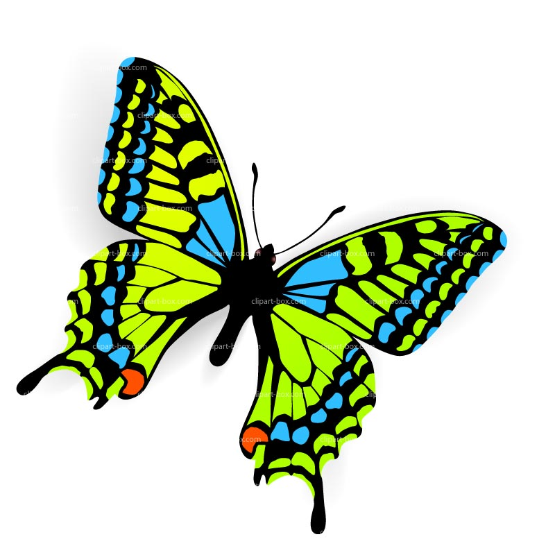 1 clipart butterfly. Net panda free images