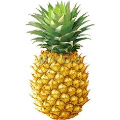 1 clipart pineapple. Outline black and white
