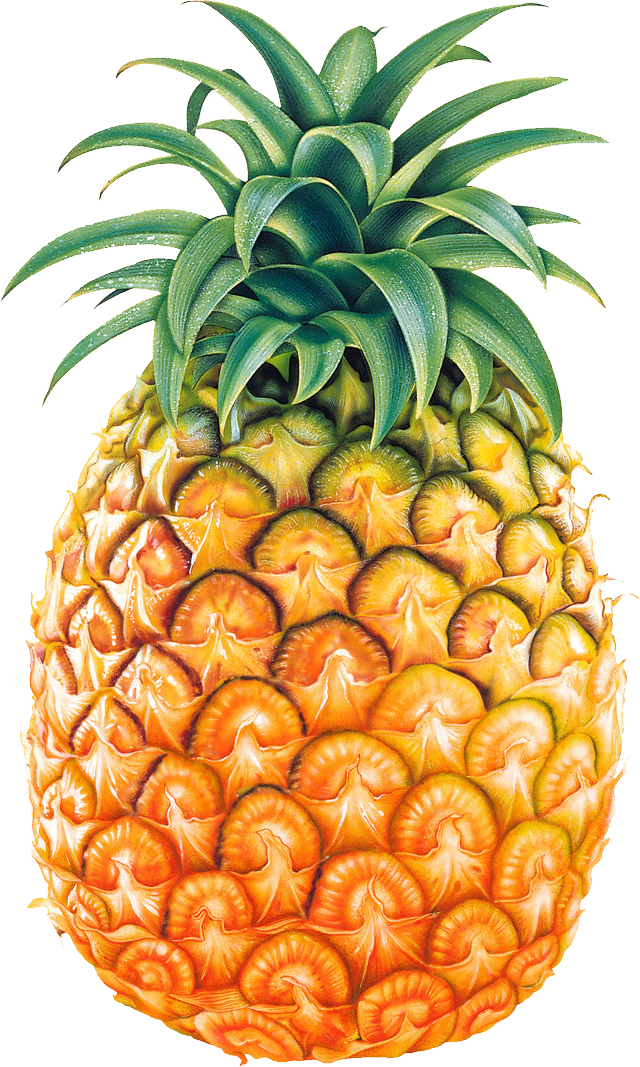 Pineapple black and white. Spaghetti clipart transparent background