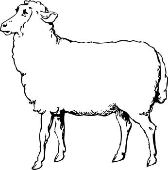 1 clipart sheep. Free black and white