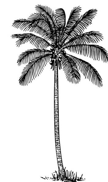 100 clipart palm tree. We start with made