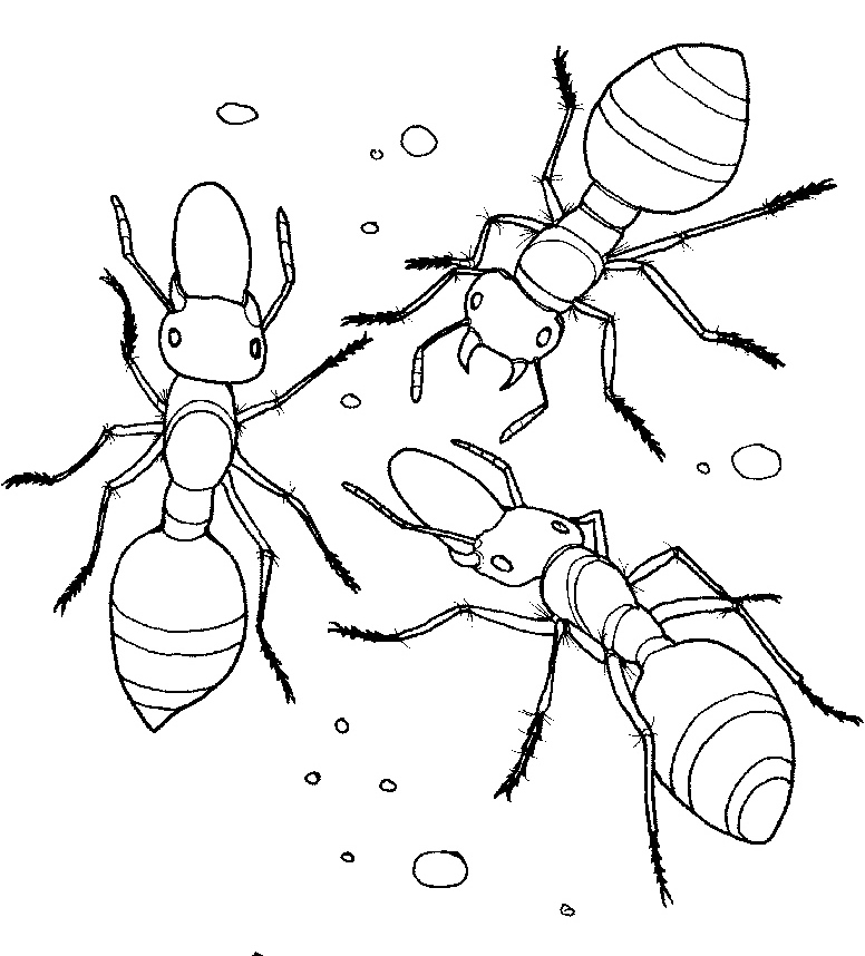 Ants coloring page pencil. 2 clipart ant