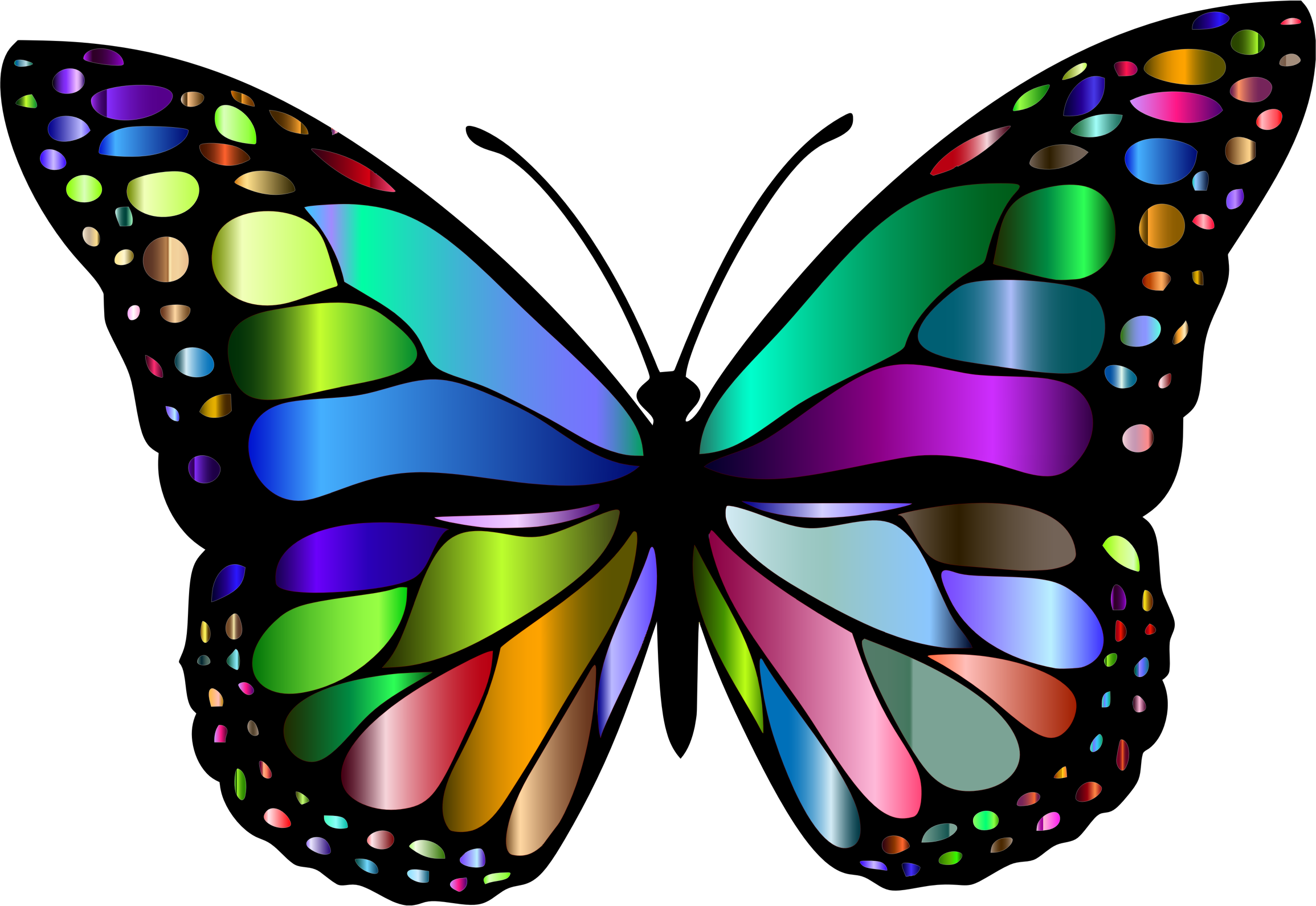 2 clipart butterfly. Monarch variation big image
