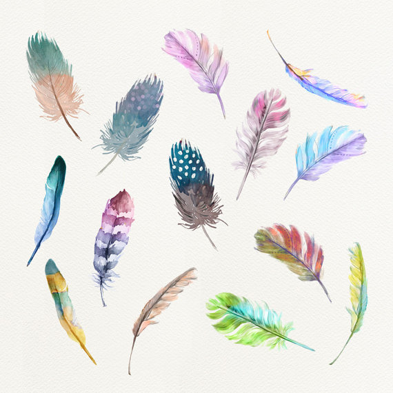 watercolor feathers cliparts. 2 clipart feather