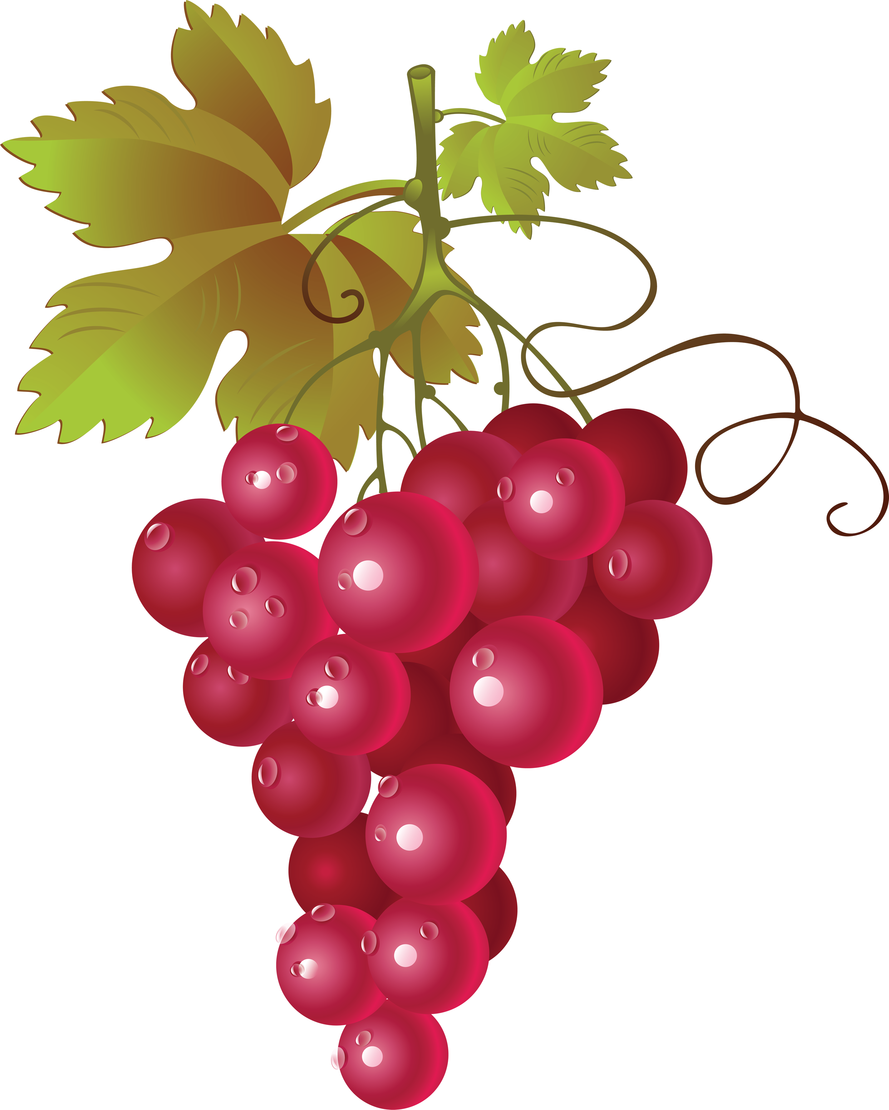 Png image free picture. 2 clipart grape