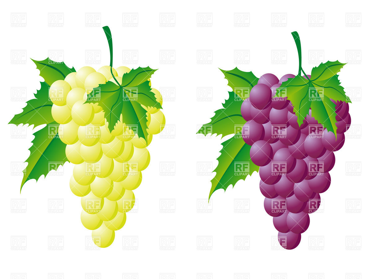 Grapes clipartix . 2 clipart grape