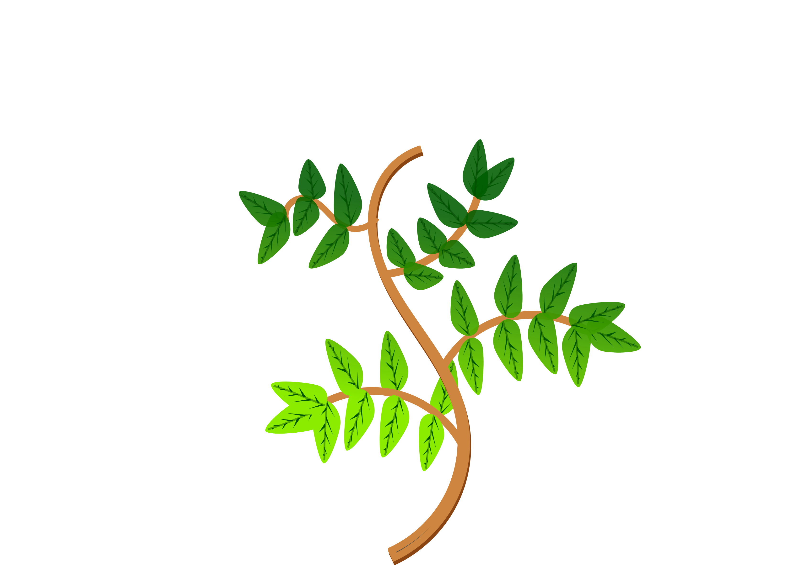 Leaves and branches big. 2 clipart leaf