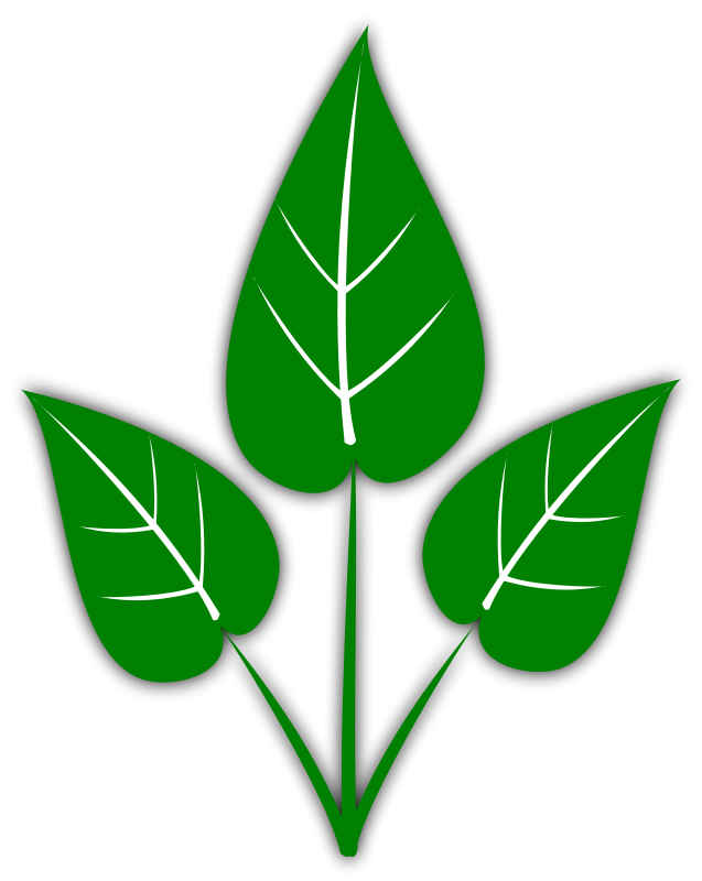 2 clipart leaf. Free leaves graphics images