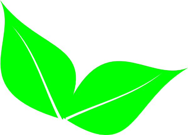 Two Leaf Clipart