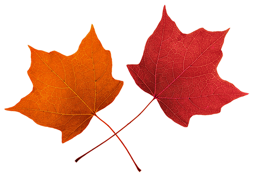 Fall leaves clip art. 2 clipart leaf