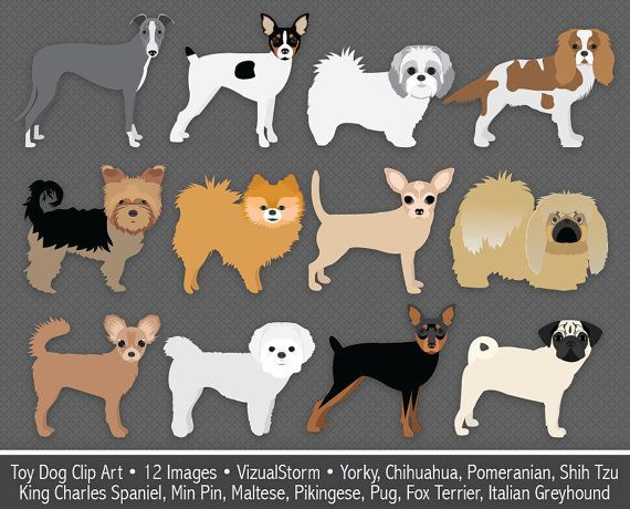Cute toy dog breeds. 2 clipart min
