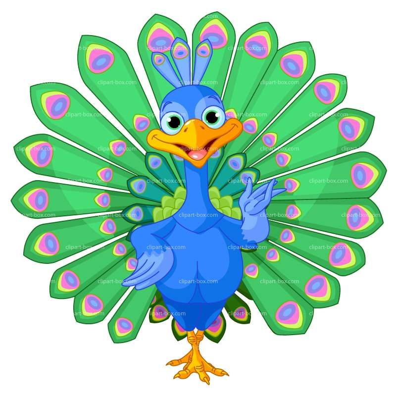 Royalty free vector design. 2 clipart peacock