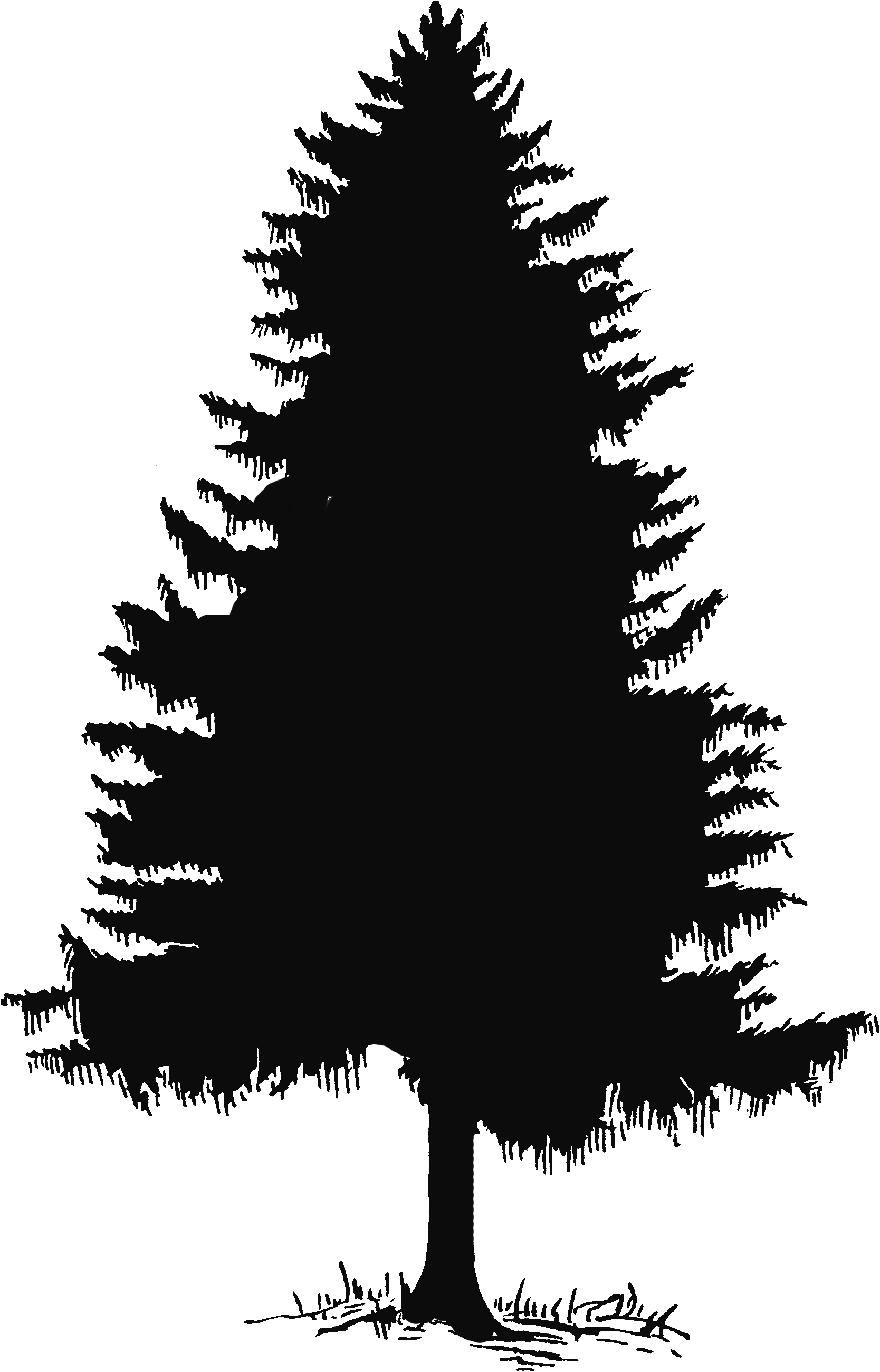 Cedar tree silhouette clip. Television clipart advertiser