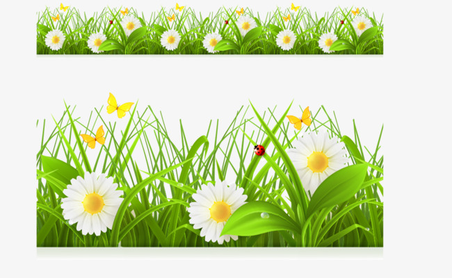 chrysanthemum flowers png. 2 clipart spring