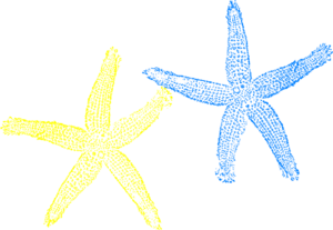 2 clipart starfish. Blue and yellow clip