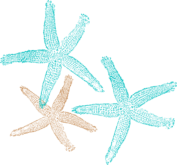 Shell clipart teal. Starfish clip art coral