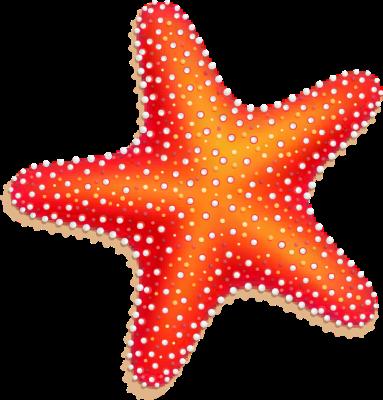 2 clipart starfish. Cliparting com