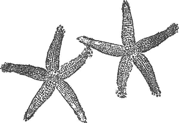 2 clipart starfish.  clip art at