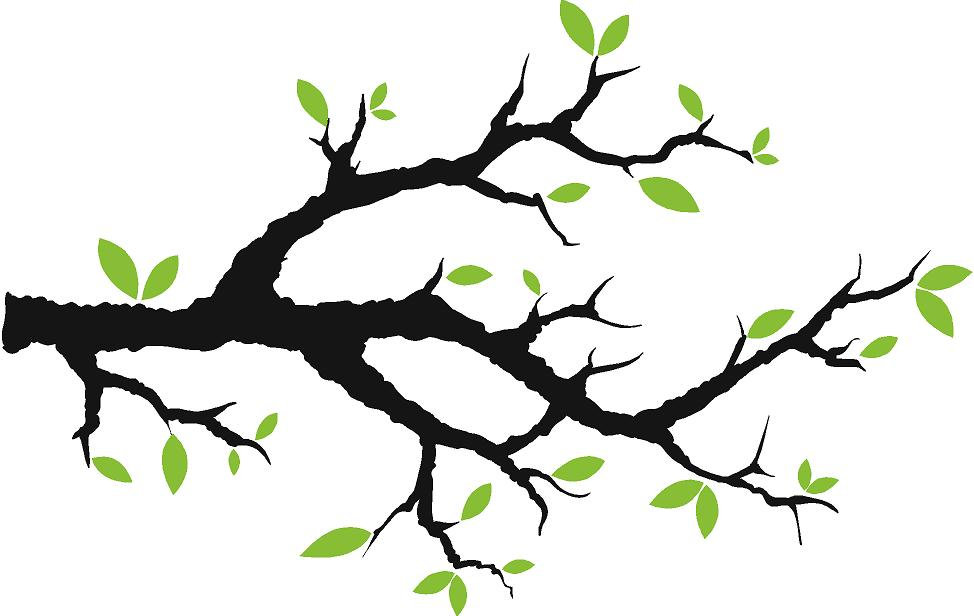 Comely pictures of branches. Branch clipart tree limb