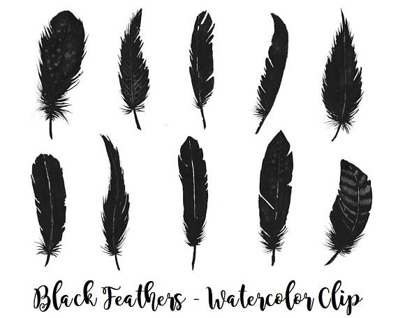 3 clipart feather. Buy for usd black
