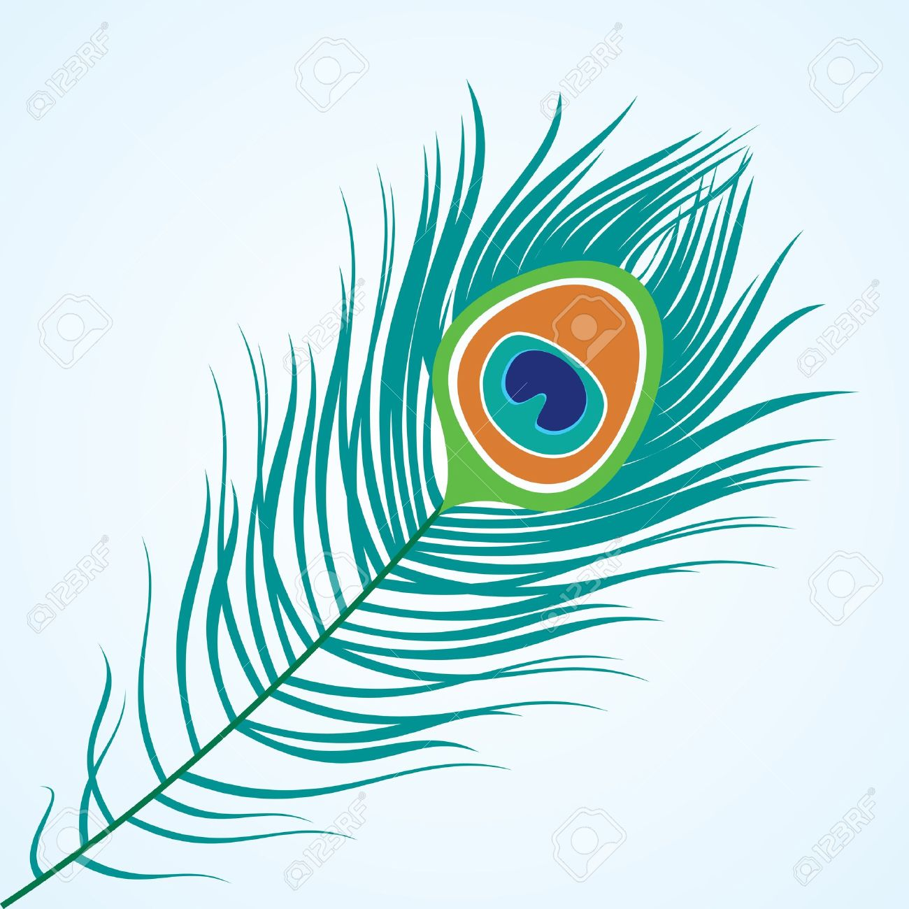 Peacock station . 3 clipart feather