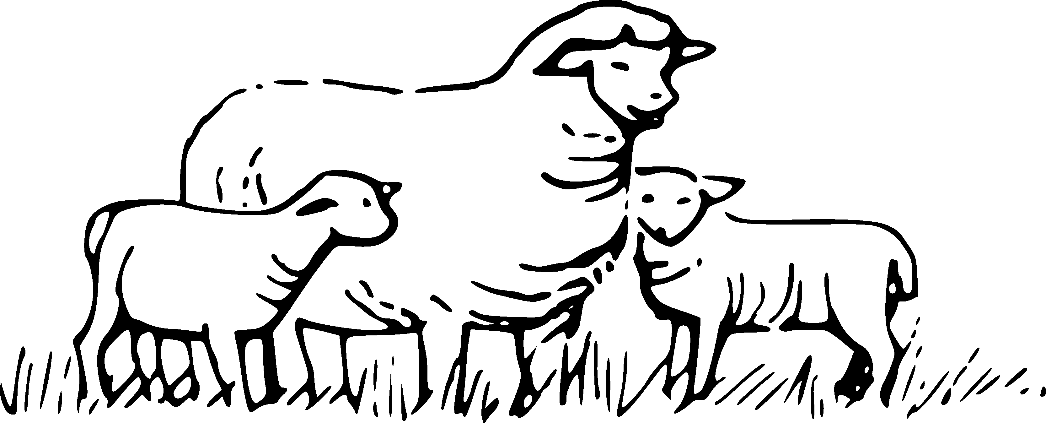 3 clipart sheep. Unique black and white