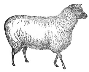 Free graphics images and. 3 clipart sheep