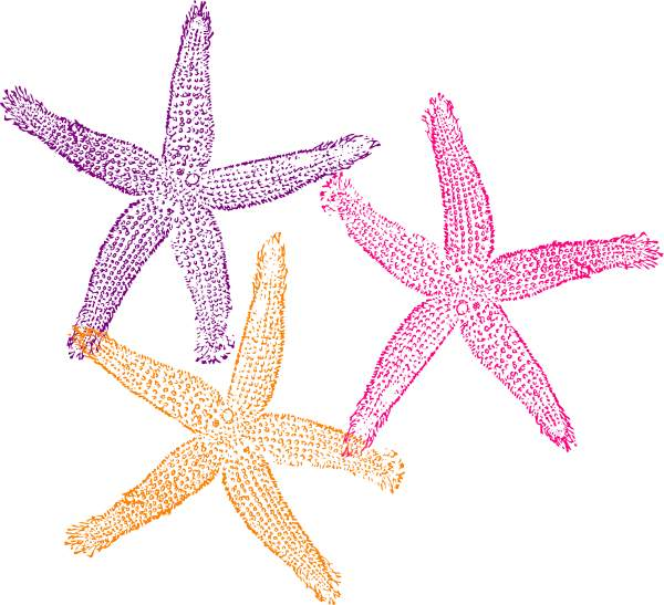 Cute free images gclipart. 3 clipart starfish