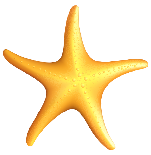 Pin by marina on. Shell clipart starfish