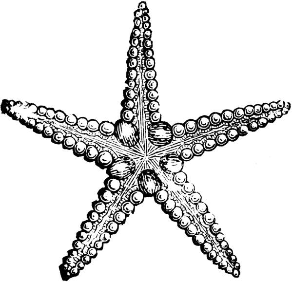 Black and white station. 3 clipart starfish