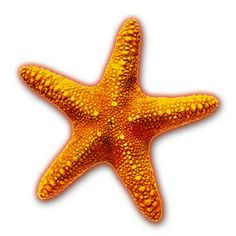 Colorful seashell png ocean. 3 clipart starfish