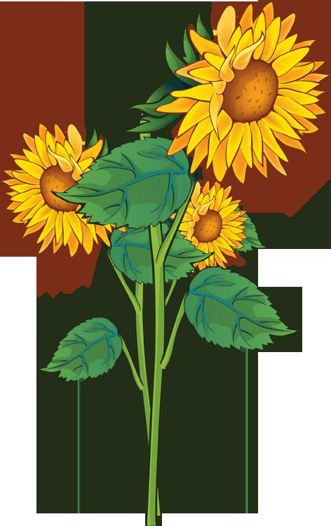 3 clipart sunflower. Clip art free printable