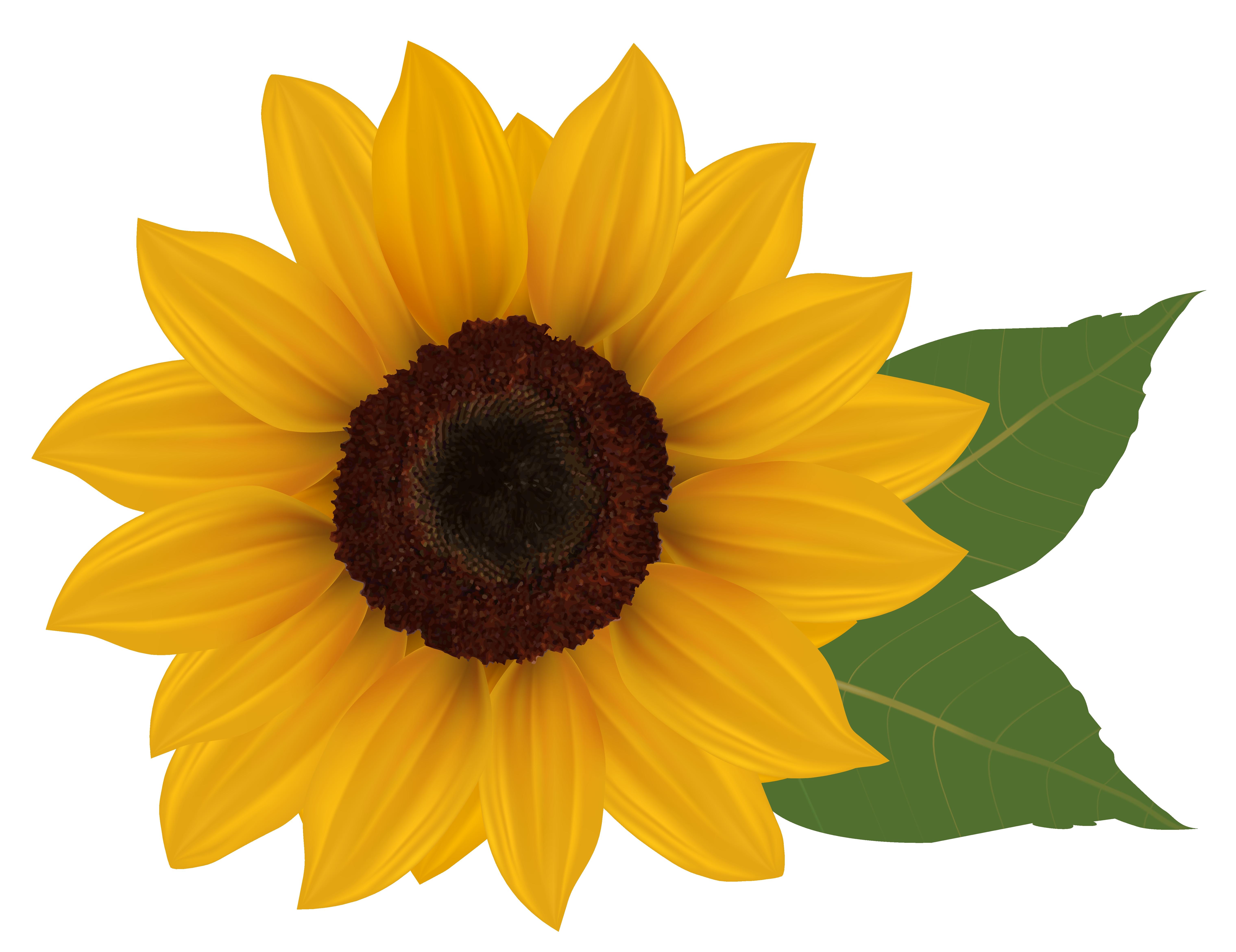 3 clipart sunflower. New design digital collection