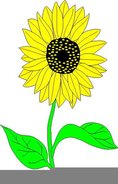 Pictures free images at. 3 clipart sunflower
