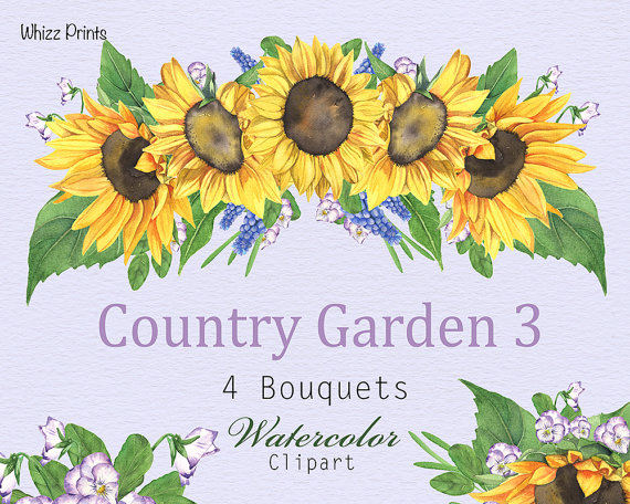 Watercolor floral painting flowers. 3 clipart sunflower