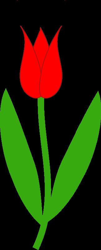 3 clipart tulip. Clip art border free