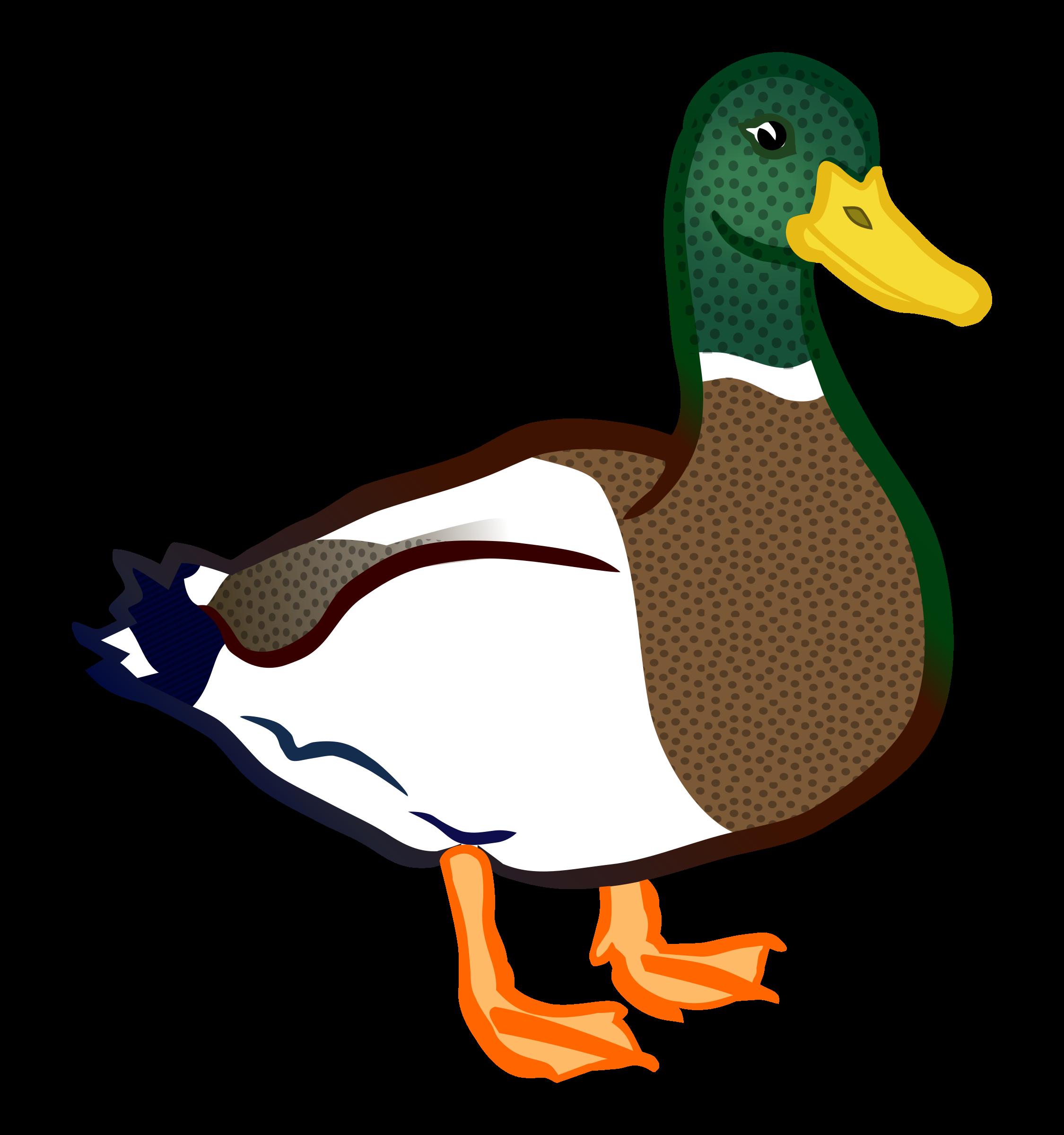 Duck coloured big image. Ducks clipart dack