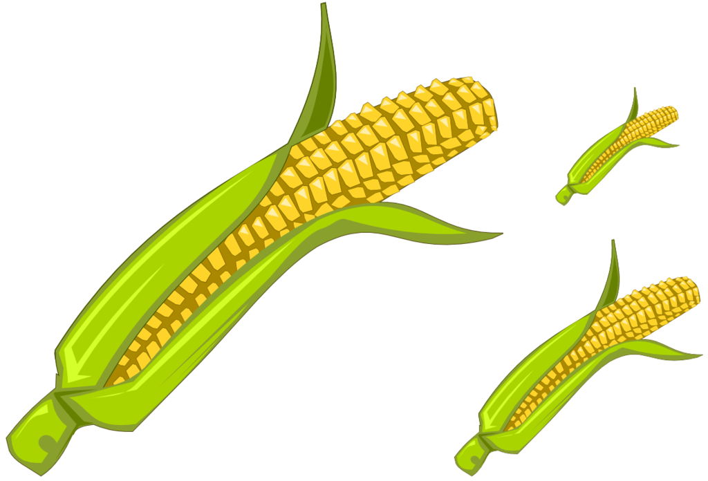 Corn by vyoma on. 4 clipart object
