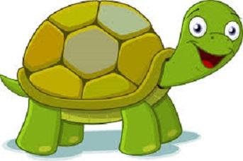 4 clipart turtle. Beachcomber volunteers will host