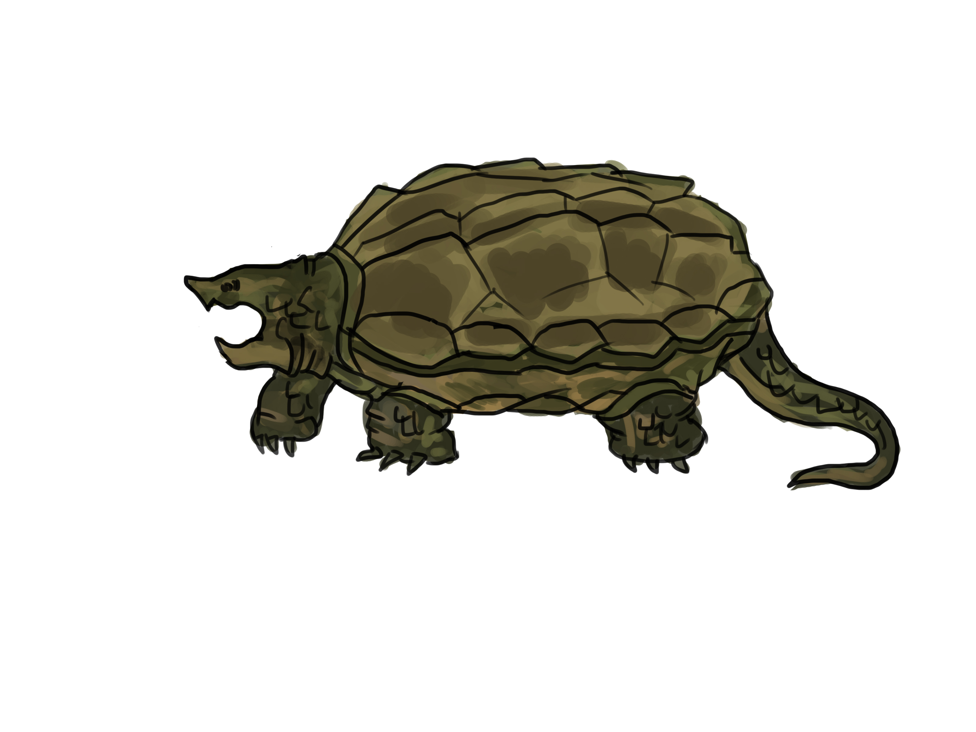 4 clipart turtle.  ways to draw