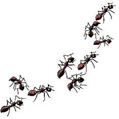 R sultats de recherche. 5 clipart ant