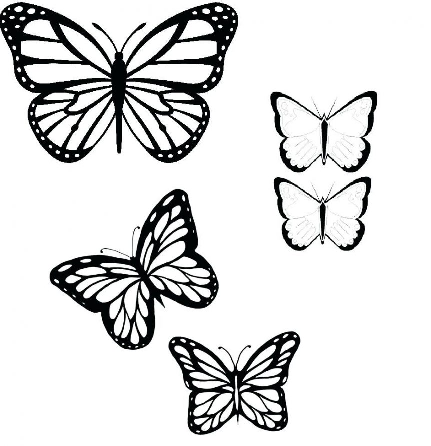 5 clipart butterfly. Drawing outline at getdrawings