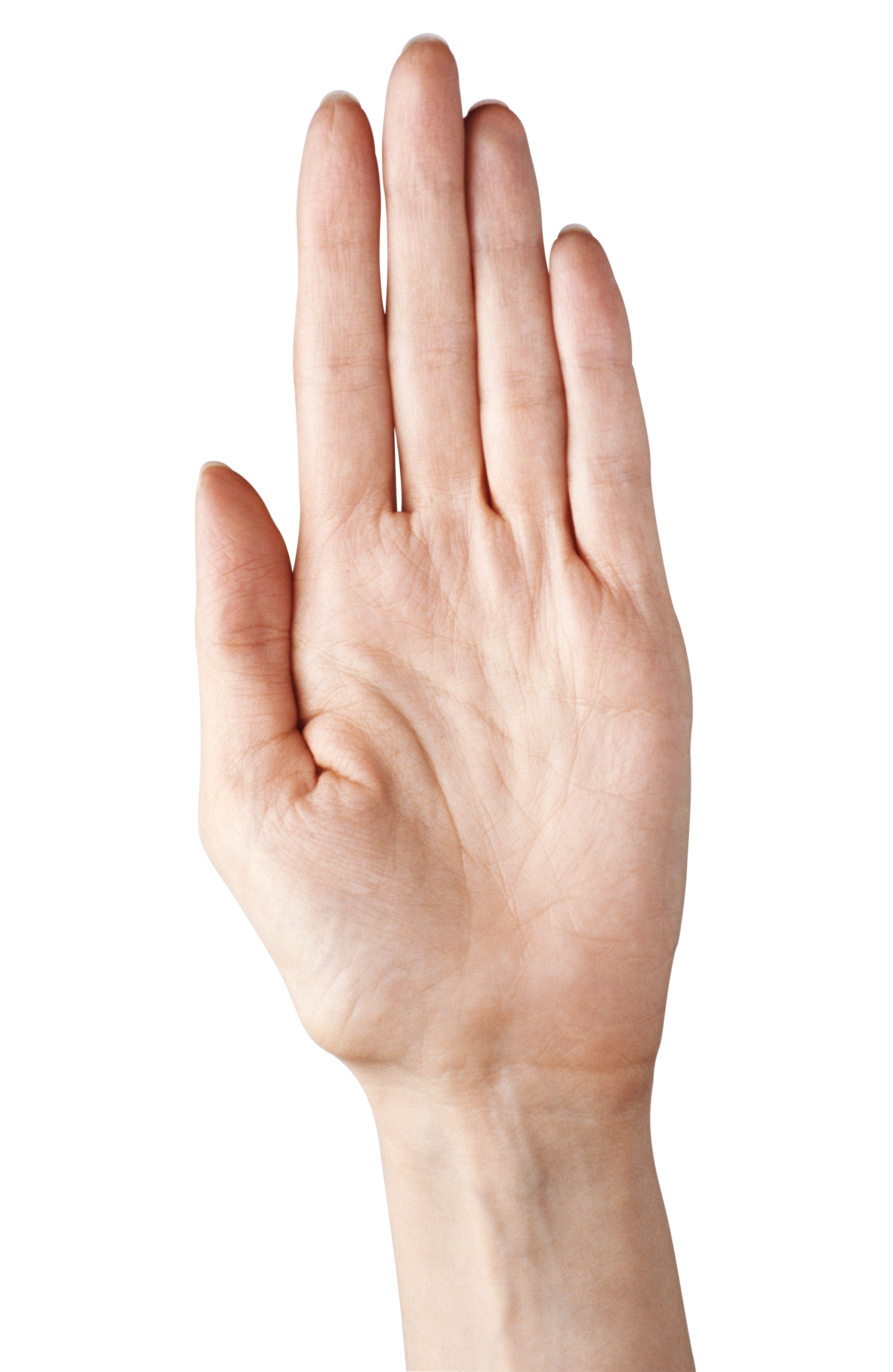 Showing five png picture. Fingers clipart nice hand