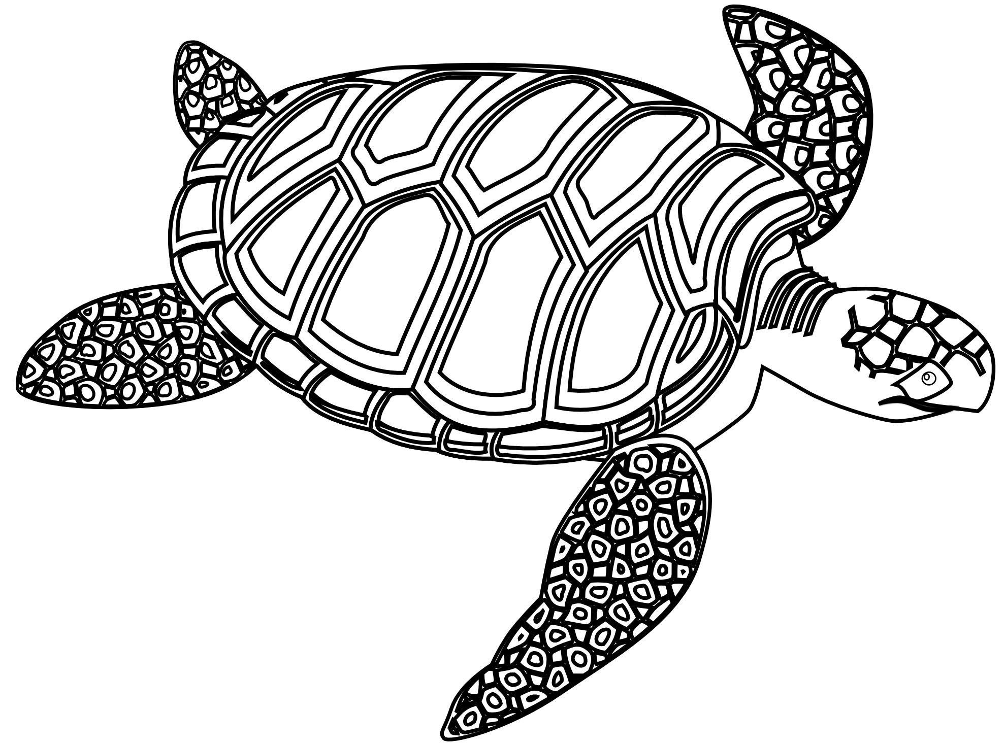 5 clipart sea turtle. Black and white google