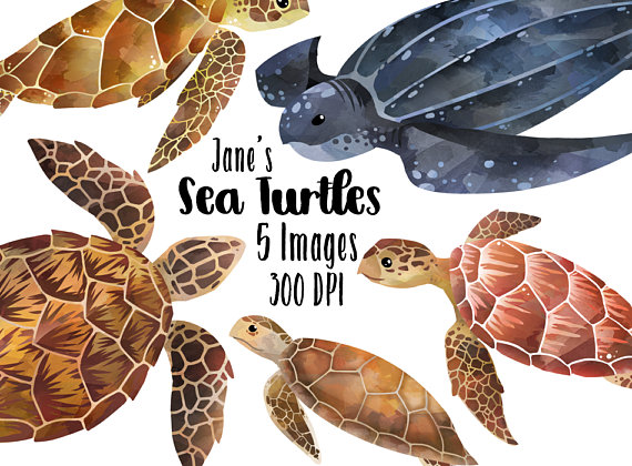 5 clipart sea turtle. Watercolor turtles species download