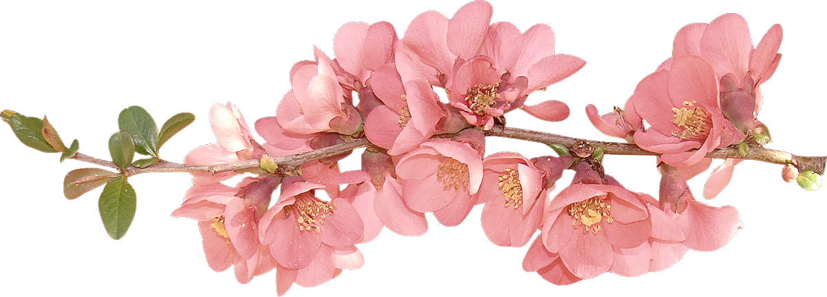 Image flowers clip art. Spring flower png