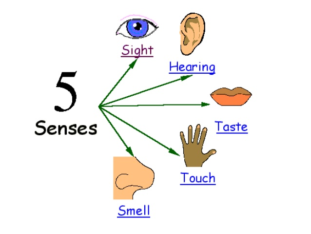 My five . 5 senses clipart
