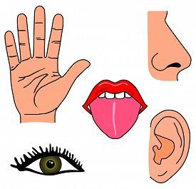 5 senses clipart. Image result for my