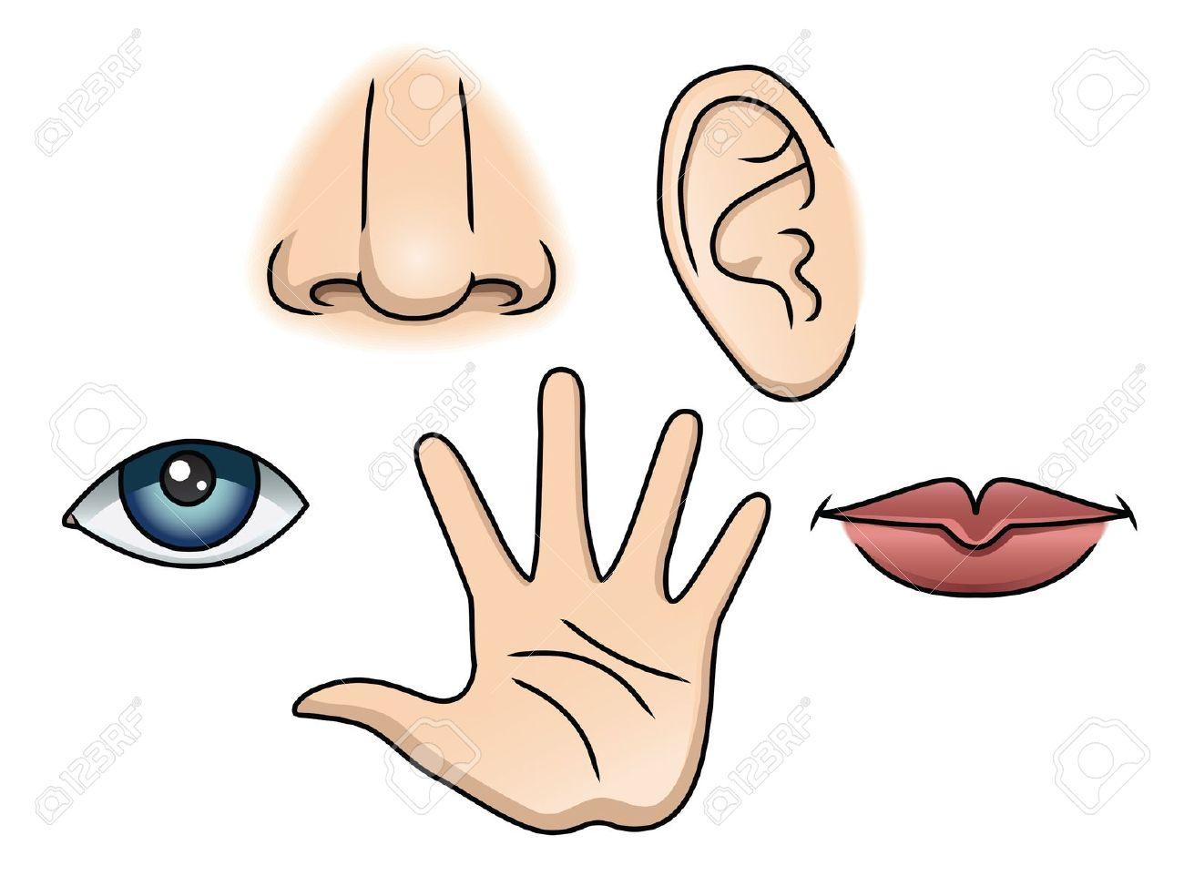 . 5 senses clipart