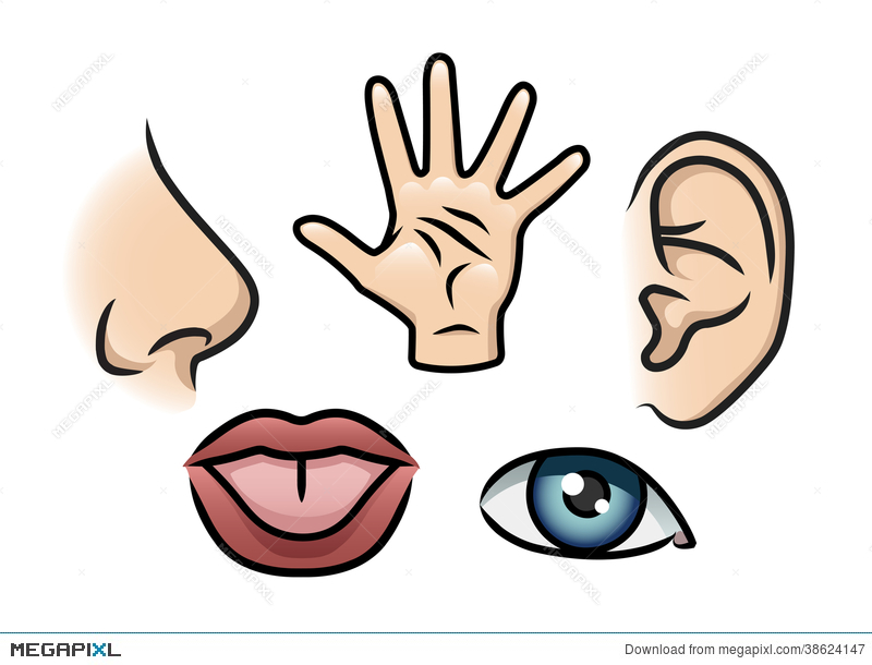 5 senses clipart animated. The five illustration megapixl